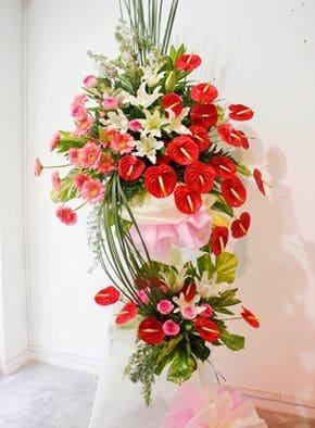 hoa hong mon khai truong
