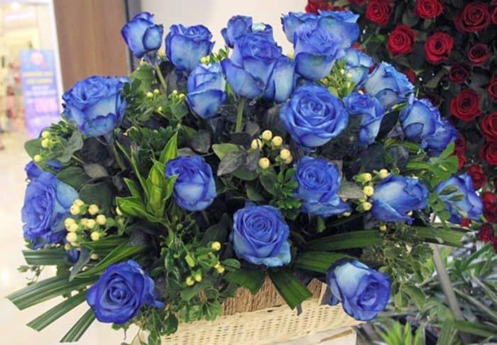 Hoa đẹp màu xanh