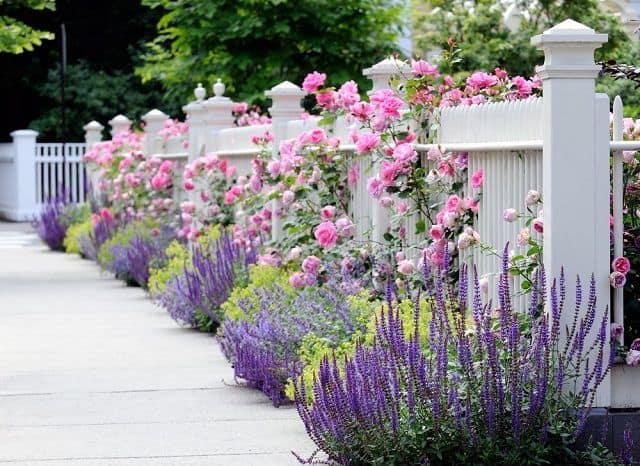vuon hoa hong dep