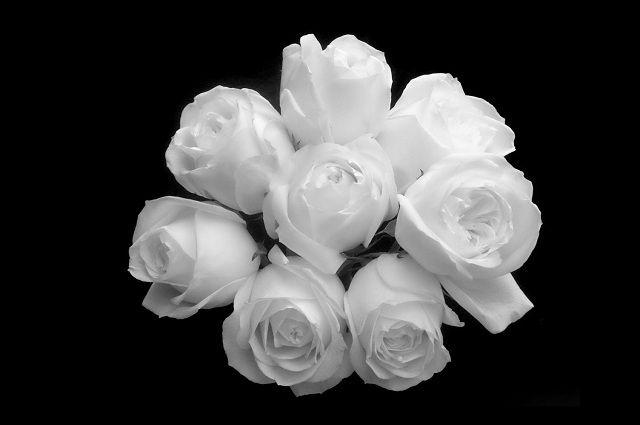 Bó hoa hồng trắng tặng