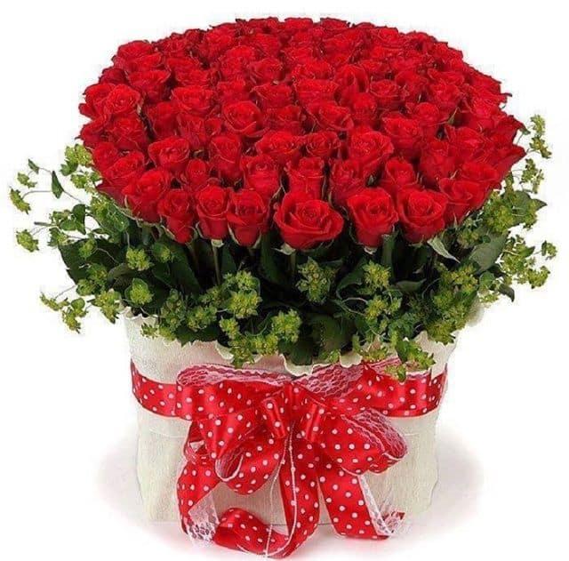 Hoa hồng đẹp nhất hệ mặt trời