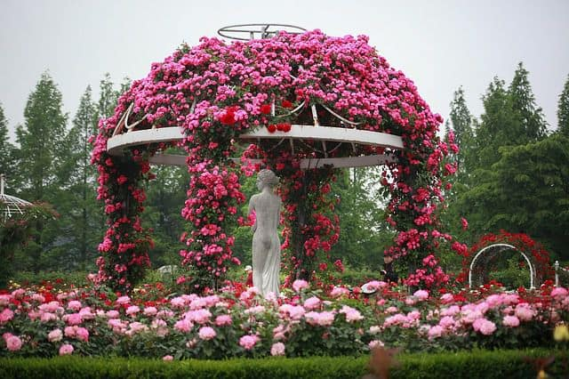 vuon hoa hong tao hinh dep