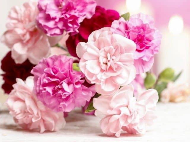 hoa cẩm chướng tặng mẹ 201-10