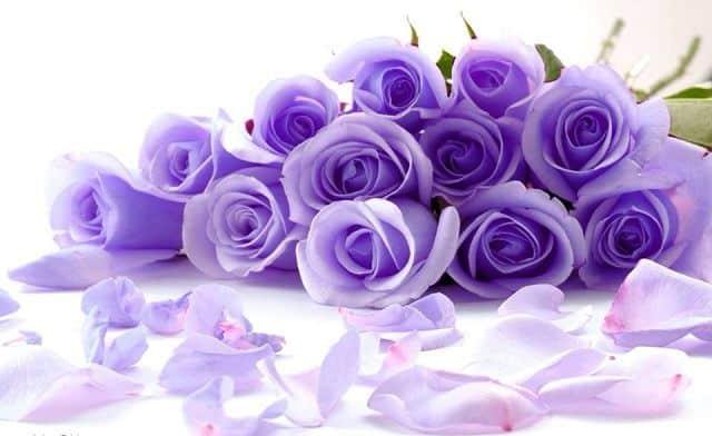 Hoa hồng 20 - 10 đẹp