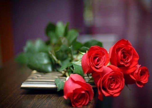 5 bông hồng