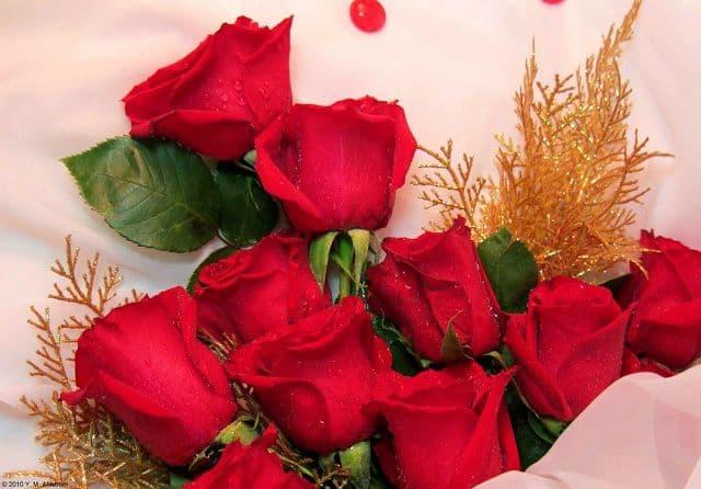 Hoa hồng tặng mẹ nhân ngày 20-10