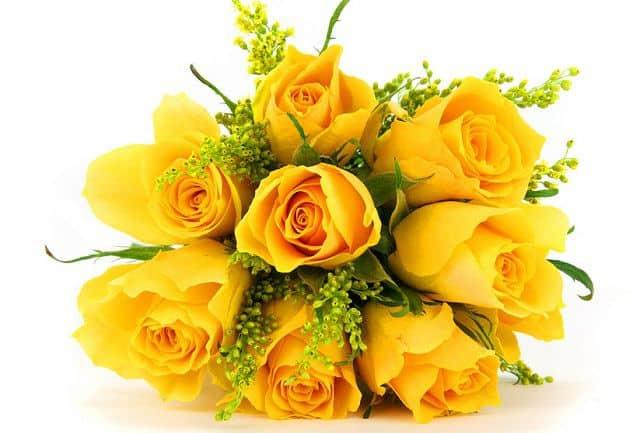 ý nghĩa của màu các loại hoa hồng