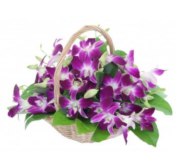 Hoa lan tặng mẹ 20-10
