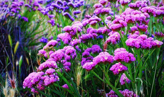 hoa salem dep