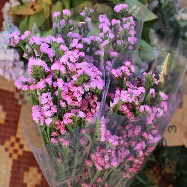 y nghia hoa salem