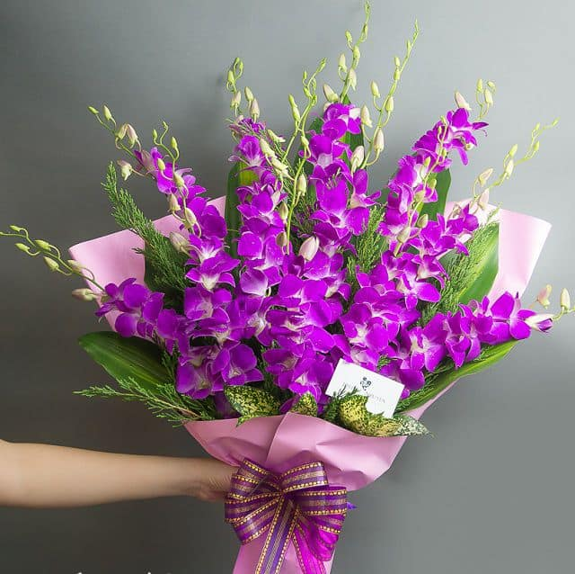 Hoa lan tím sinh nhật