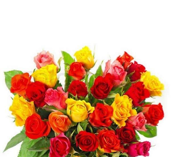 Bó hoa hồng nhiều màu