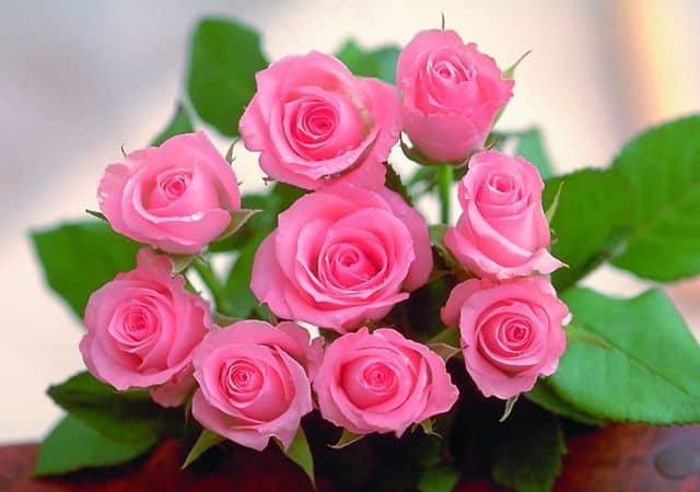 Bó hoa hồng phấn đẹp tặng sinh nhật người yêu