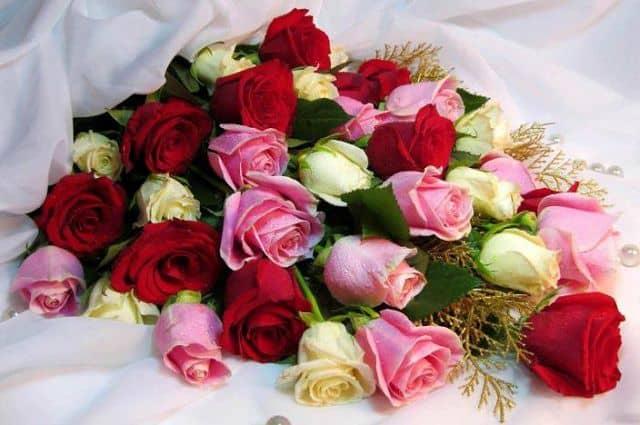 Hoa hồng sinh nhật đẹp nhất thế giới