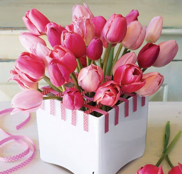 Hoa tuplip