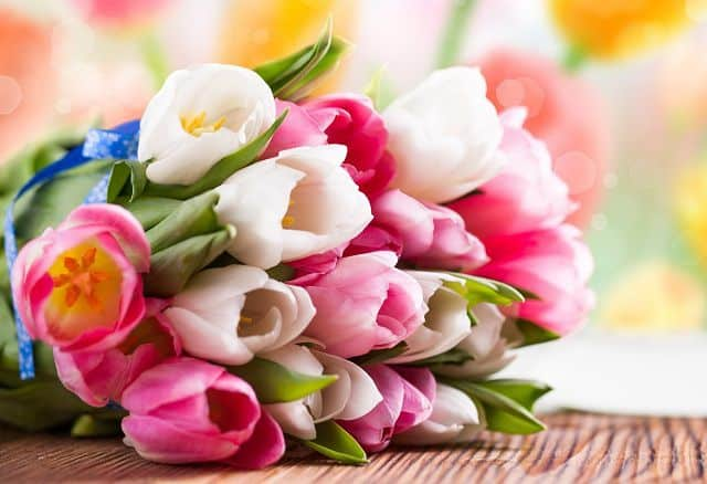 Bó hoa tulip