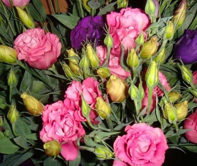 Hoa màu vàng và hồng