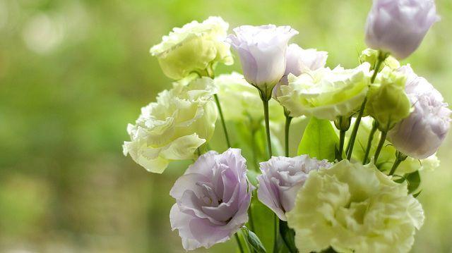 Hình ảnh đẹp và ý nghĩa hoa lan tường
