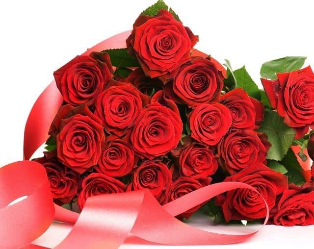 ý nghĩa các loài hoa - hoa hồng đỏ