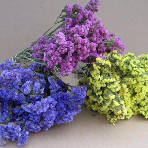 hoa salem màu xanh