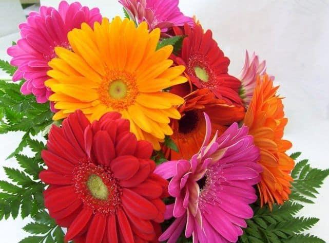 Bó hoa sinh nhật đẹp độc đáo và ý nghĩa nhất hiện nay