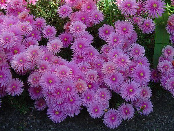 Hoa màu tím đẹp lạ