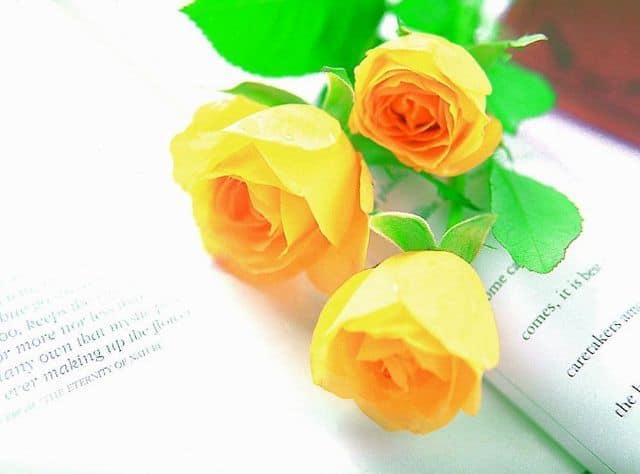 Hình ảnh đẹp và ý nghĩa hoa hồng vàng 4