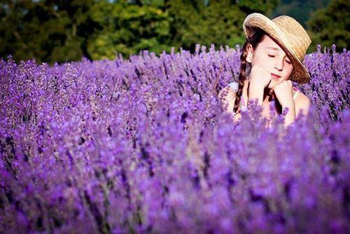hinh anh dep va y nghia hoa oai huong 8