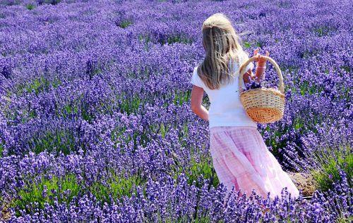 hinh anh dep va y nghia hoa oai huong 10