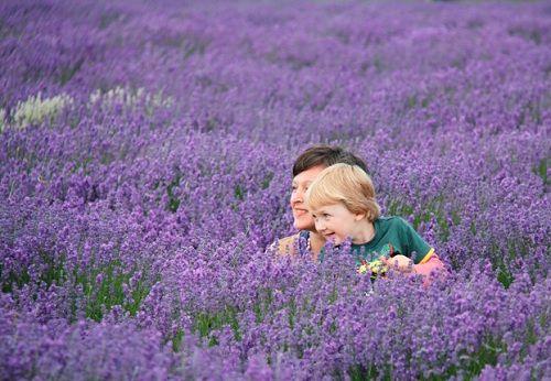 hinh anh dep va y nghia hoa oai huong 11