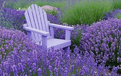 hinh anh dep va y nghia hoa oai huong 12