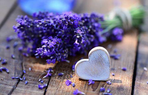 hinh anh dep va y nghia hoa oai huong 14