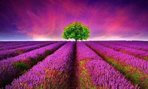 hinh anh dep va y nghia hoa oai huong 17