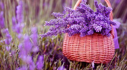 hinh anh dep va y nghia hoa oai huong 4