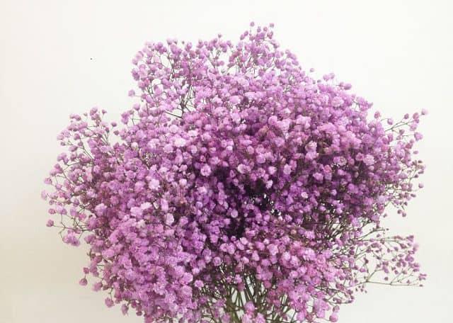 Hoa baby ĐẸP NHẤT (GIÁ RẺ) và ý nghĩa hoa baby | Mrhoa.com