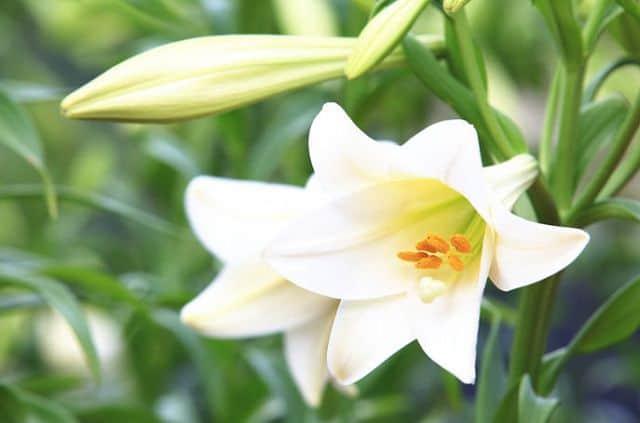 hinh anh dep va y nghia hoa hue