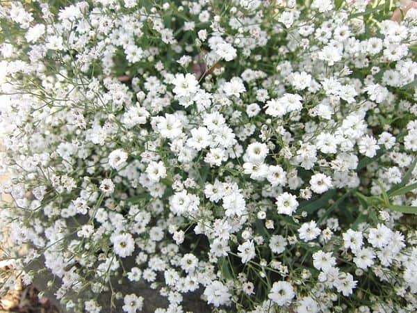 hoa bi đẹp
