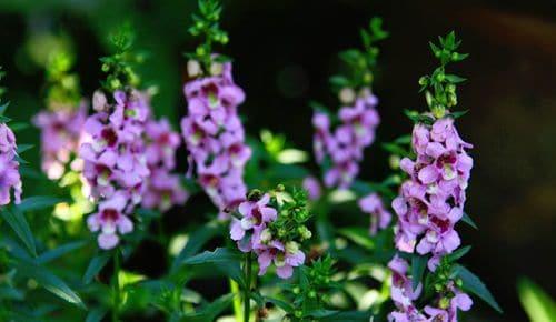 Hoa bâng khuâng
