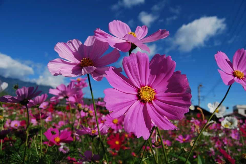 Hoa tím đẹp nhất thế giới