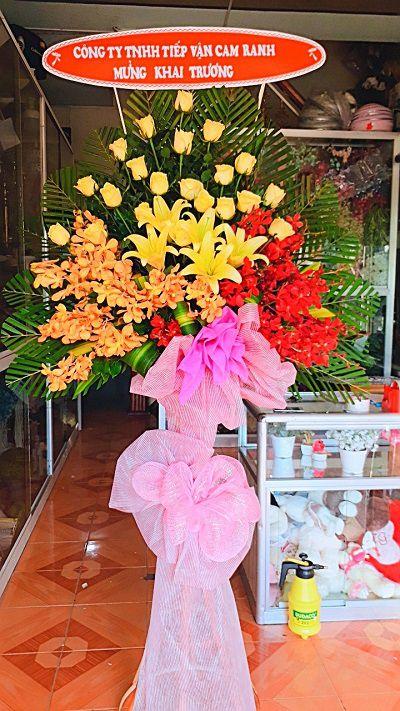 Hoa khai truong cam ranh khanh hoa