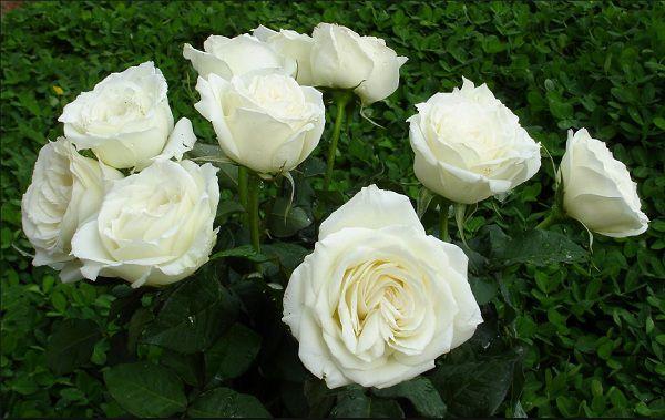 Hoa sinh nhật giỏ hoa hồng 1