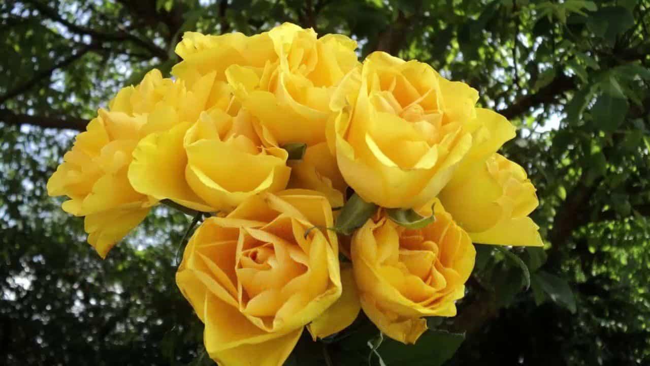 Hoa sinh nhật giỏ hoa hồng 7