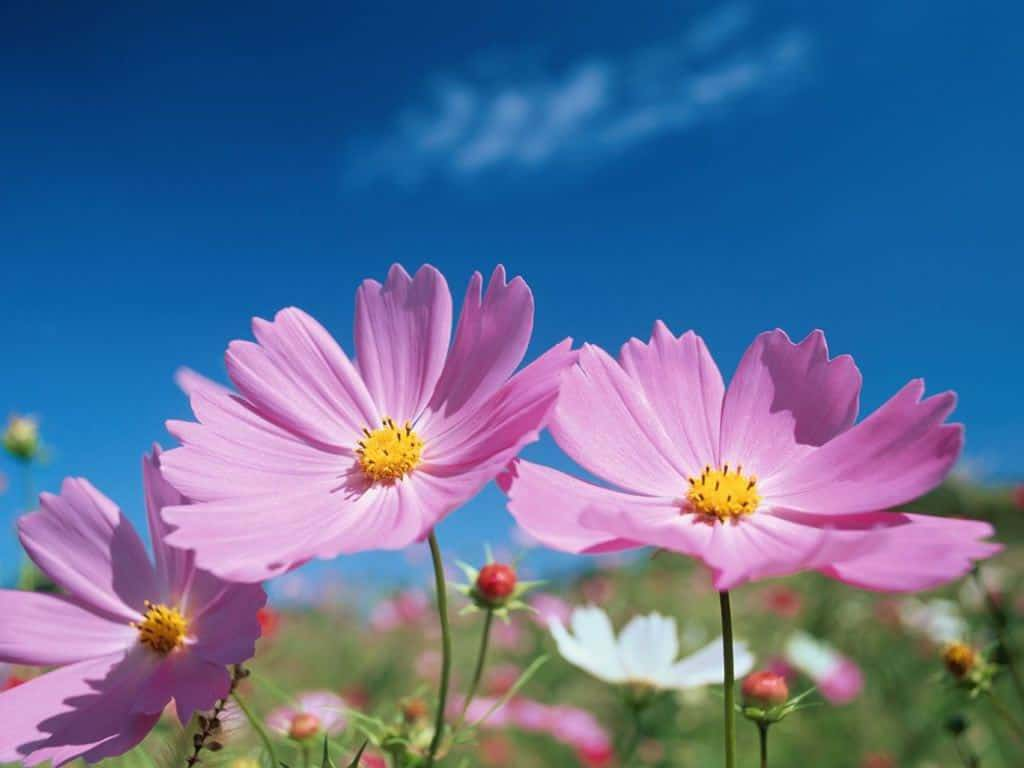 Hoa màu tím đẹp nhất