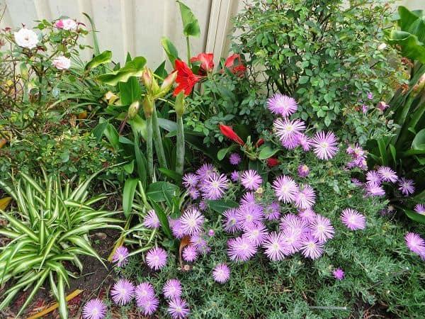 Vườn hoa màu tím