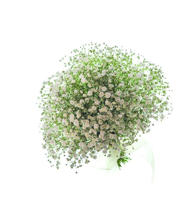 bó hoa baby đẹp nhất thế giới