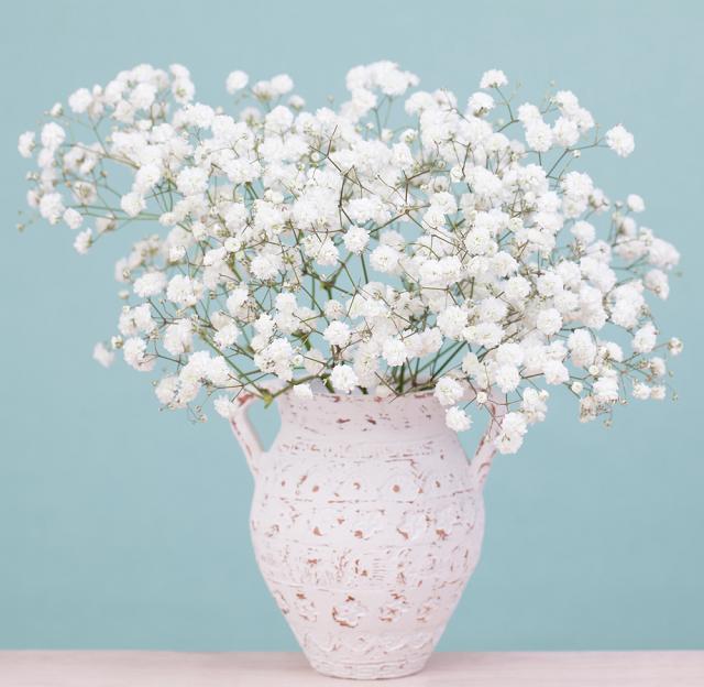 hoa bi cắm chậu đẹp nhất