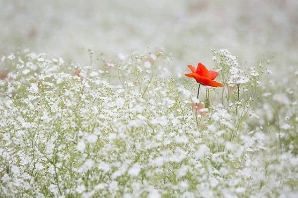 vườn hoa baby
