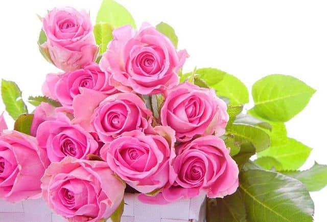 Shop hoa tươi tại TpHCM giá rẻ