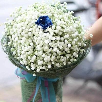 Hoa bo nui thanh quang nam