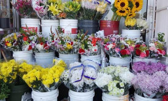 Shop hoa tươi trần não